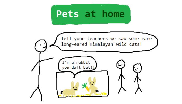 pets at home2